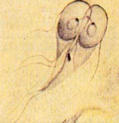 Лямблия. Гепатолог-72